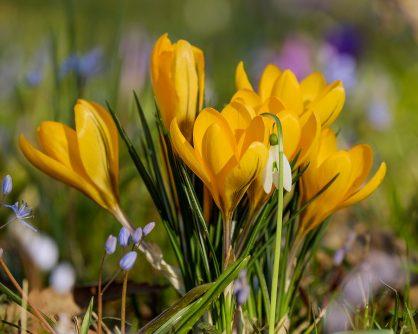 Hoera, het wordt lente!